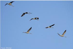Navier et ces drôles d'oiseaux