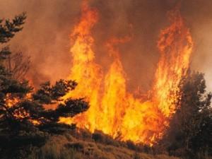 Modélisation des feux de forêt