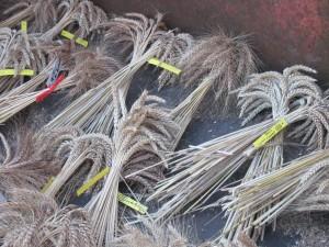 Réseaux d'échange de semences