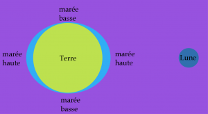 maree fausse