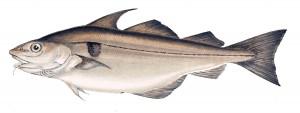 Pour une pêche maximale durable