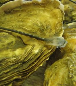 Les huîtres rêvent-elles de moutons électriques ?