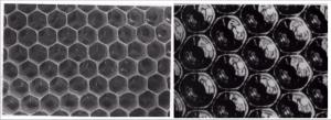 Des abeilles aux sources de la parole