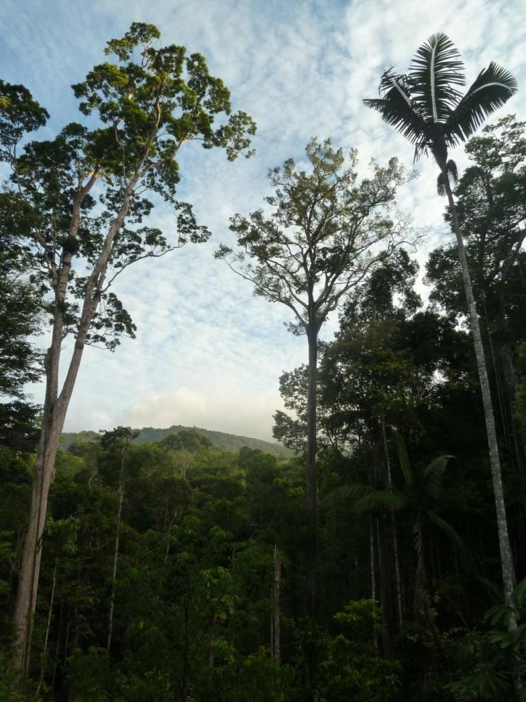 Modélisation en Forêt Guyanaise
