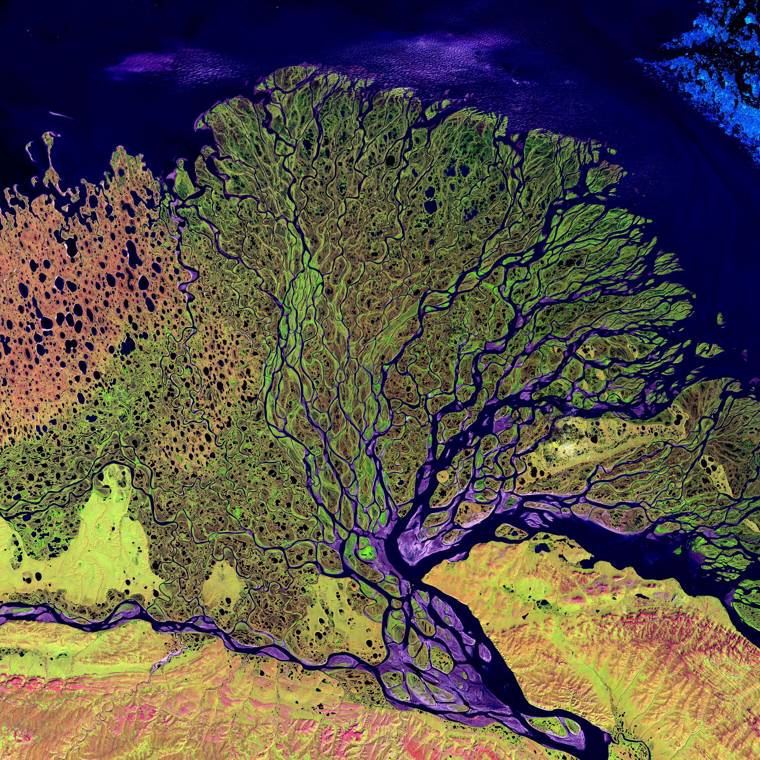 Delta de la rivière Lena.