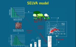 Un modèle de dynamique forestière