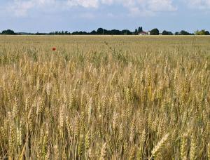 L'agriculture est-elle responsable des gaz à effet de serre?